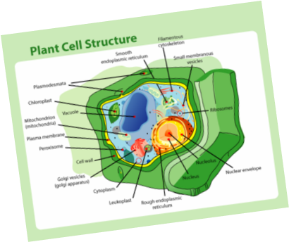 Science seventh grade cell project task 1 cell pre test ccuart Choice Image
